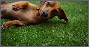 artificial grass for pets. Artificial-grass-for-dog-pets Artificial Grass For Pets S