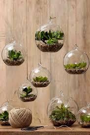 diy succulent terrarium design ideas tips for beginner gardeners