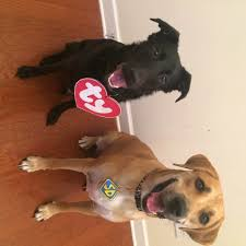 beanie baby and scooby doo costumes