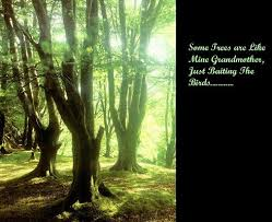 Tree Quotes Stunning 48 Best Tree Quotes Sayings