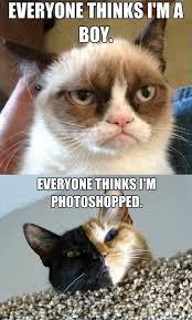 grumpy cat so beautiful. Interesting Beautiful Poor Grumpy I Think Sheu0027s Beautiful In Grumpy Cat So Beautiful