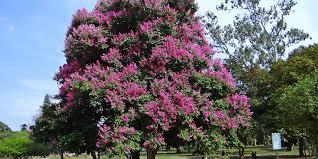 Come riconoscere 6 alberi da frutto dai loro fiori. Alberi Fioriti Per Giardino Quali Sono I Migliori Codiferro Master Gardener