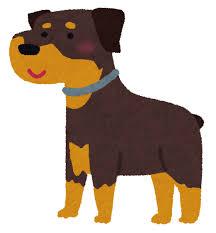 ロットワイラーのイラスト(犬) | かわいいフリー素材集 いらすとや