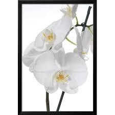 white orchid framed print wall art on white orchid framed wall art with white orchid framed print wall art walmart