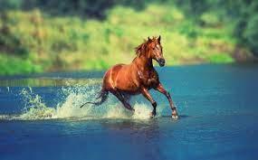 Horse 4k Ultra HD Wallpaper ...