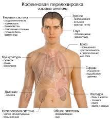 Влияние кофе на организм человека coffeecard Передозировка кофеином