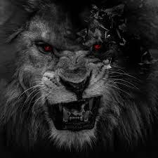 Download Wallpaper Lion Black And White Hd Cikimmcom