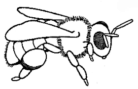 Small Picture Baby Honey Bee Coloring Pages Coloring Sky