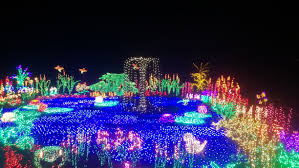 Bellevue Botanical Garden Holiday Lights Bellevue Botanical Garden Bellevue Washington Great Xmas