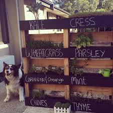 herbs are something so simple to grow they take up very little space they can be dried and used later on or you can use them fresh