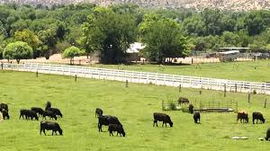 Cattle ranches hand job in arizona