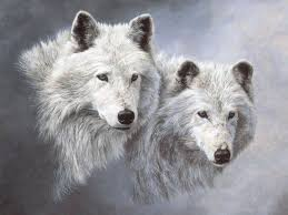 picture of snow | ... · Gallery · 3D-Art · Snow Wolfs | Free Background  1600x1200 | Animals, White wolf, Animals beautiful
