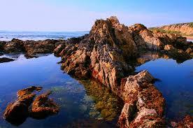 66 Abiding Southern California Tide Pools