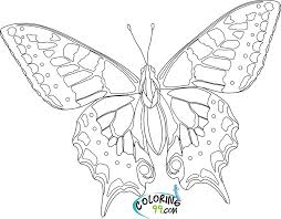 Small Picture Printable Coloring Pages Adults Only Butterfly Gekimoe 68248