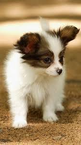 Cute Lovely Puppy Walking Dog Animal ...