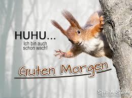 Guten Morgen Sprüche Mit Eichhörnchen Sprüche Suche