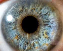 Your <b>Blue</b> Eyes Aren't Really <b>Blue</b> - American Academy of ...