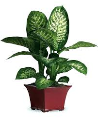common indoor plants common house plant small flowering indoor common house plants ivy common indoor plants