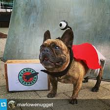 nibbler dog costume. cutest #nibbler cosplay this 2014 by @marlowenugget | #futurama #halloween source: nibbler dog costume