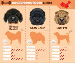 Dogs Breed Vector Infographics Types Of Dog Breeds From China