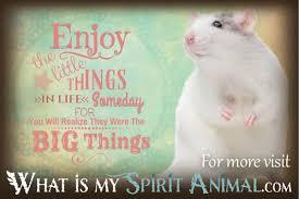 Funny Rat Quotes