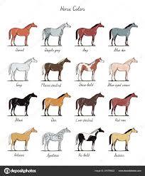 Dapple Dun Horse Stock Vectors Royalty Free Dun Horse