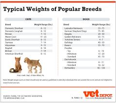 53 Veritable Domestic Shorthair Cat Weight Chart
