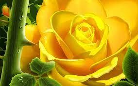 Rose flower wallpaper ...