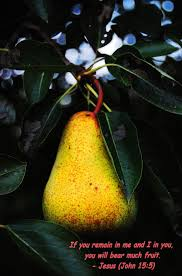 Image result for john piippo pear