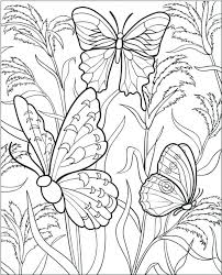 Free Printable Butterfly Coloring Pages Butterfly Coloring Pages