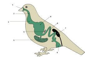 Контрольная работа класс по теме Класс Птицы страница  hello html m7fdb363c png