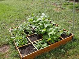 Small Picture Raised Bed Vegetable Garden Layout Designs Ideas Home Design Ideas