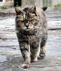 Cat Health Wikipedia