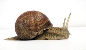 Land snail - Wikipedia