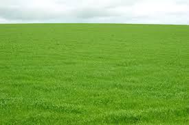 Green Grass Field Field Of Grass Green Nongzico
