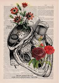 anatomy ilrations old book pages prrint 4