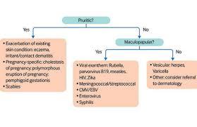 Diagnostic Flow Chart For Rash In Pregnancy 8 Cmv