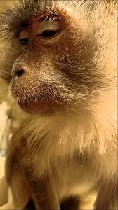 monkey putting on makeup