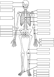 Small Picture Skeleton Coloring Pages For Kids Coloring Home