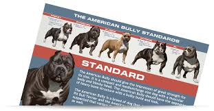 Free American Bully Graphic