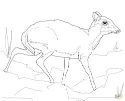 Small Picture Lesser Mouse Deer coloring page Free Printable Coloring Pages