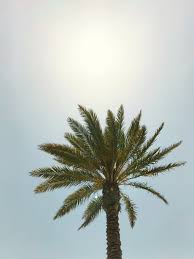 Here's 116 (hd) beach wallpapers for your iphone or desktop computer. 20 Palm Tree Pictures Hd Download Free Images On Unsplash