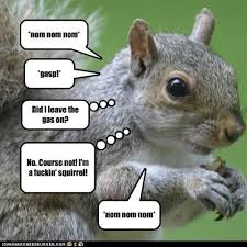 Even Squirrels Quote Eddie Izzard | Quotes, Sayings and Cliches ... via Relatably.com