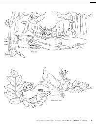 Carving Patterns Simple 48 Gunstock Carving Patterns Lora Irish 48 Amazon