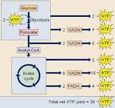Pin On Chapter 26 Nutrition Metabolism