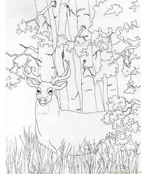 Small Picture deer coloring pictures to print free printable coloring page