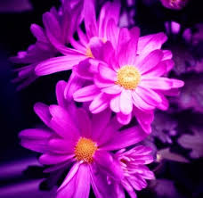 colorful flower wallpaper free stock