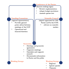 Organizational Structure Of The Convention Cms