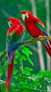 wallpaper hd for mobile samsung galaxy note 3. Fine Galaxy Parrots Paradise Samsung Galaxy Note 3 Wallpaper Intended Hd For Mobile N