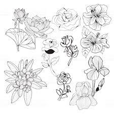 手描きコレクション黒と白の花白黒イラスト お絵かきのベクターアート